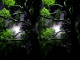 ave-bonar-3d-photography-moon-shining-through-the-trees-2009