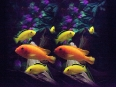ave-bonar-3d-photography-tropical-fish-2009