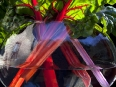 ave-bonar-photography-ruby-swiss-chard