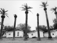 ave-bonar-photo_lower-rio-grande-valley_palm-trees