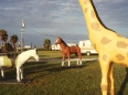 ave-bonar-photo-trailer-park-animals