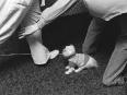 ave-bonar-photography-couple-with-dog