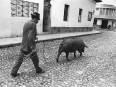 ave-bonar-photography-man-with-pig